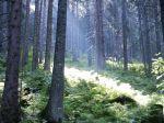 Ofenbau Wald